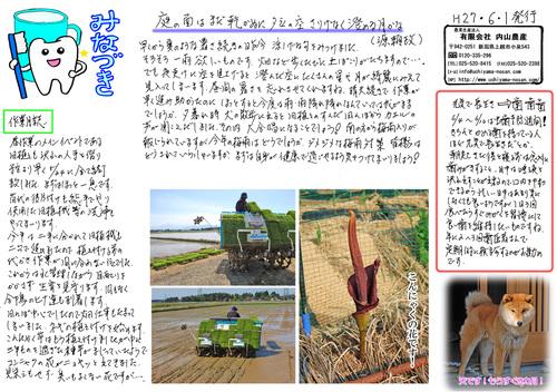新潟コシヒカリ農家 内山農産 ニュースレター6月号