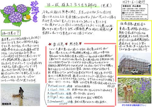 内山農産ニュースレター6月号