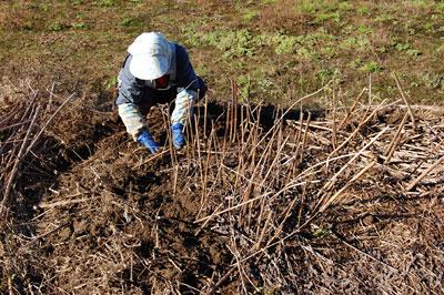 芋が眠っている土の下