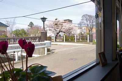 川沿いには桜
