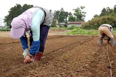 豆を蒔いて前進前進