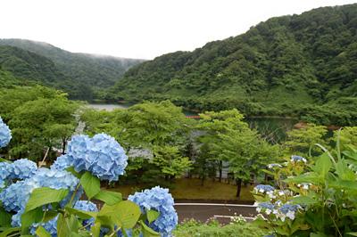 ダム湖と紫陽花