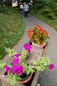 来場者を出迎える花