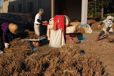 大豆を脱穀