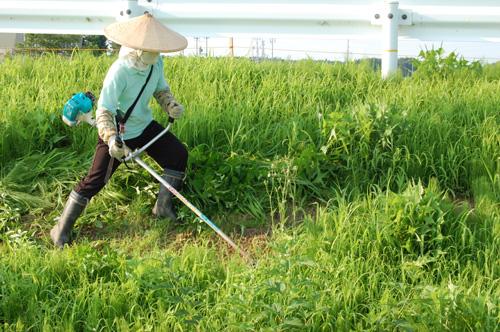 道路脇の急斜面の草刈り