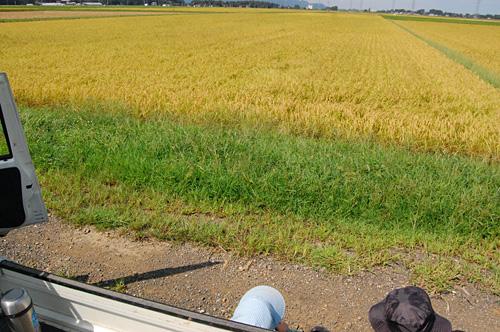 有機JAS認定米コシヒカリの田んぼ