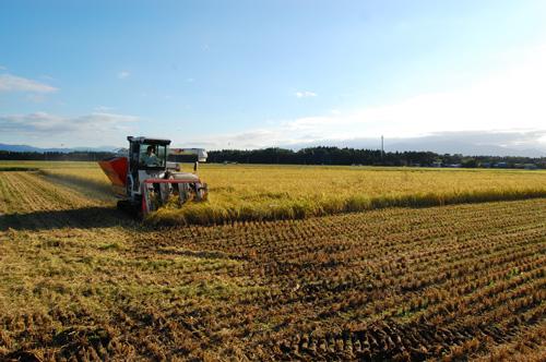 秋空の稲刈り