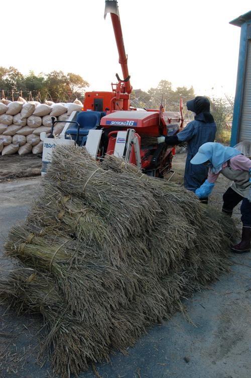 黒米を脱穀