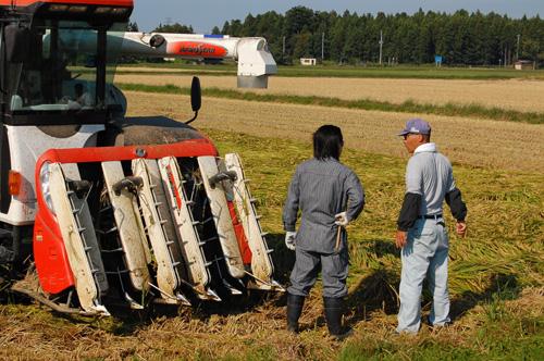 倒伏した稲を刈るコツ