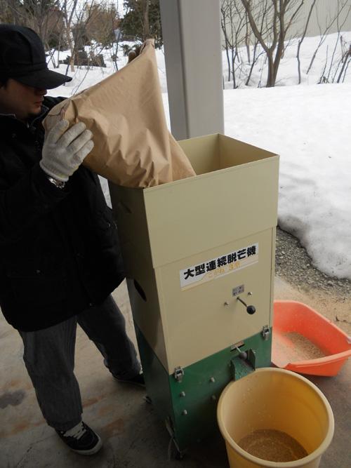 脱芒機に種籾を投入