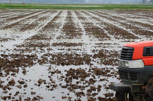 田打ち後水を入れた状態の田んぼ
