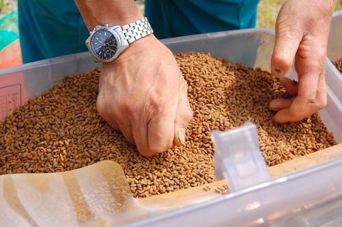 種籾を解します