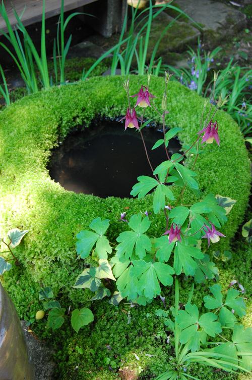 苔で覆われた水鉢