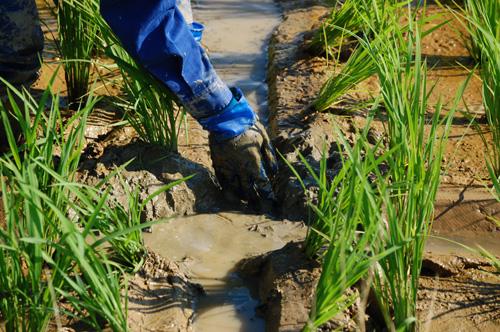 土を取り除き
