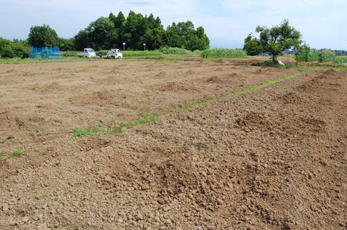 アロニアを植え付ける畑