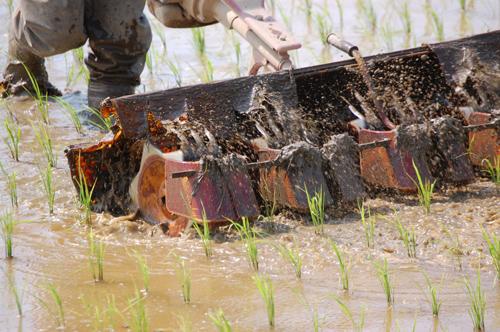 回転する爪が雑草を引っこ抜き