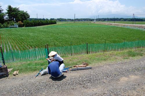 合鴨農法の田んぼ