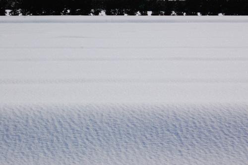 雪で覆われた田んぼ