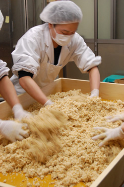 大豆と米麹をよくこねます