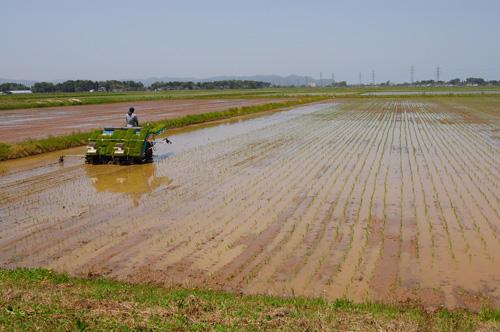 有機栽培米の田植え