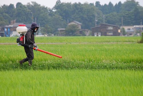肥料を撒きます