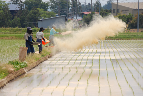 米ぬか散布