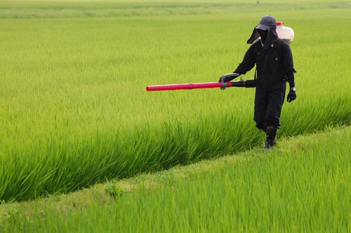 有機栽培米 穂肥 追肥