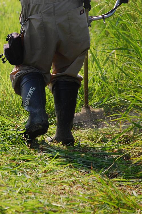 草刈り 雑草 田んぼ 除草 刈払機