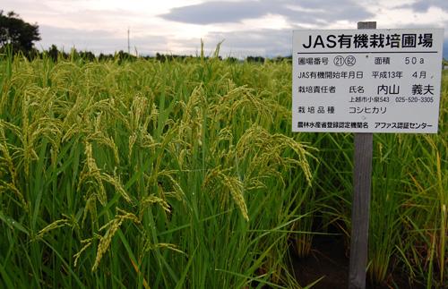 コシヒカリ 有機栽培米 有機JAS 有機農産物 JAS有機 稲穂 オーガニック