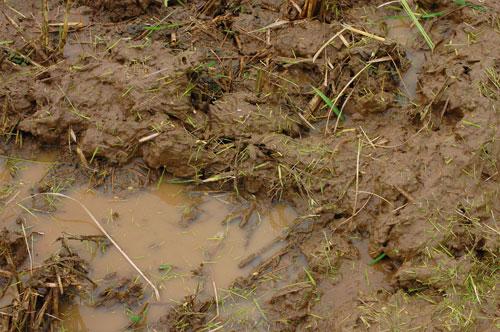 稲刈り 刈り取り 稲穂 新米 お米