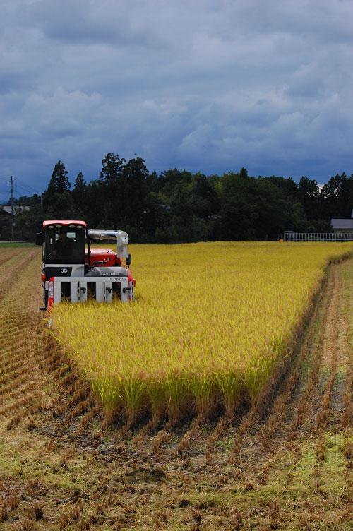 稲刈り 刈り取り 新米 田んぼ コンバイン こしいぶき