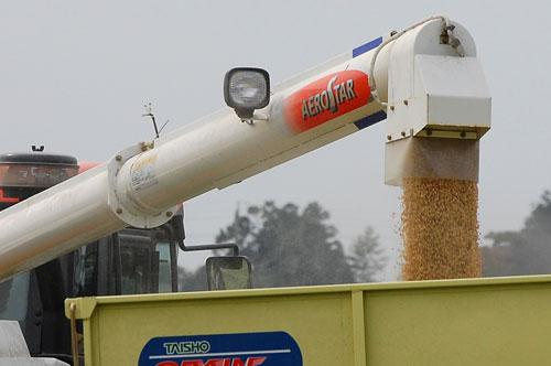 稲刈り 新米 特別栽培米コシヒカリ コシヒカリ お米 刈り取り コンバイン アンローダ グレンコンテナ