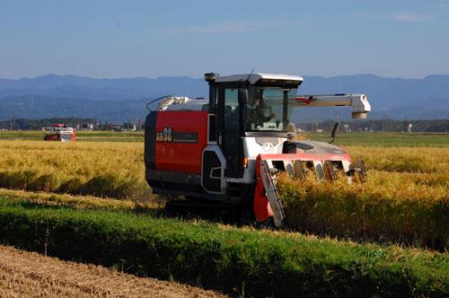 有機栽培米 有機JAS認定 JAS有機認証 コシヒカリ 新米 田んぼ 稲穂 稲刈り 刈り取り コンバイン
