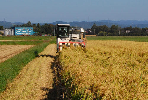 有機栽培米 有機JAS認定 JAS有機認証 コシヒカリ 新米 田んぼ 稲穂 稲刈り 刈り取り コンバイン ライスセンター